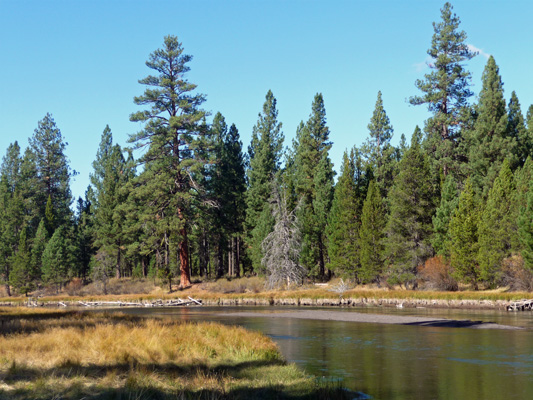 Deschutes River at Big Tree trail La Pine State Park OR