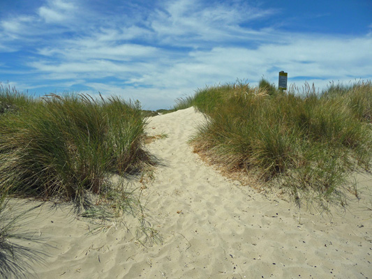Path into Oregon Dunes