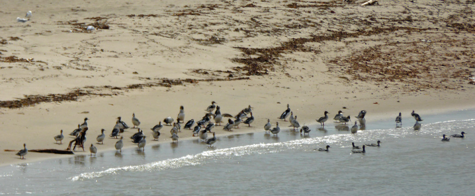 Birds on sand spit Steve's Trail Gros Morne