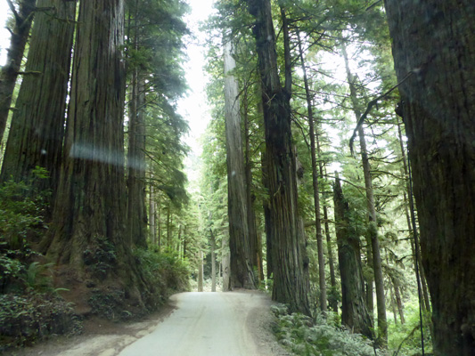 Howland Hill Road Redwood NP