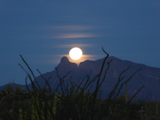 Moonrise Organ Pipe Cactus NM