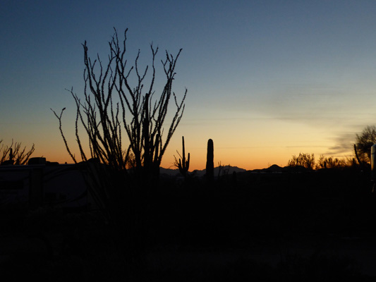 Sunset Organ Pipe Cactus NM