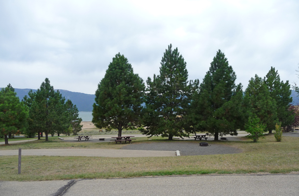 Sugarloaf Campground trees