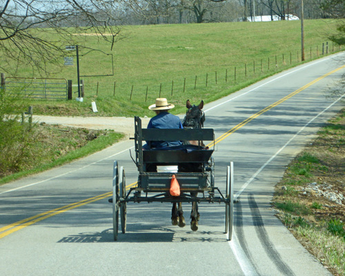 Amish buggy Tennessee