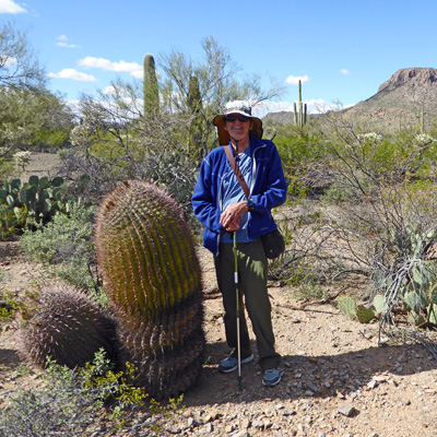 Walter Cooke large Compass Barrel Cactus